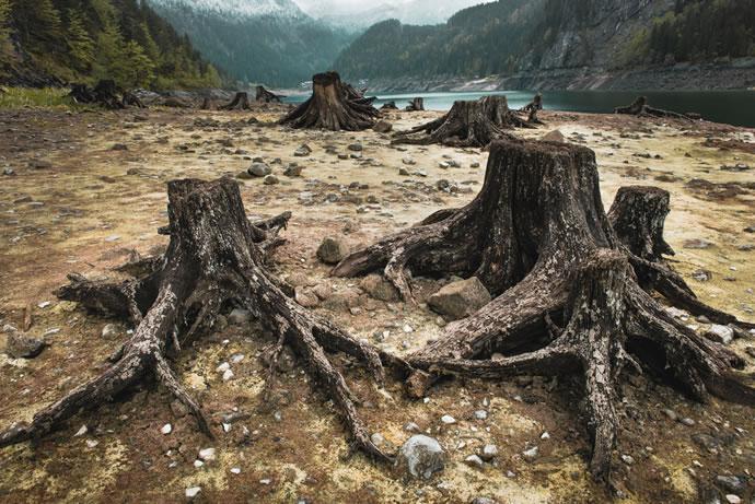 Fotos da Natureza morta